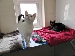 Bindy & Blackie