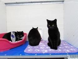 Felix, Dinky & Minnie