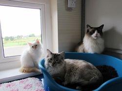 Harley, Ragnar & Mango