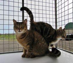 Kitty& Tiger