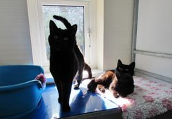 Monty & Mabel