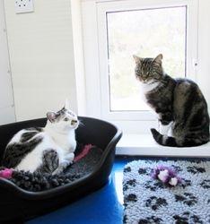 Obi & Dexter