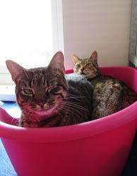 Poppy & Willow
