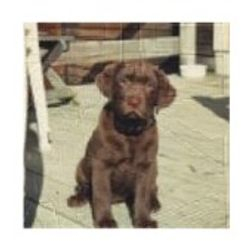 Cindy, 8 weeks old. DOB Aug. 17, 1993. She is now 12 years young!