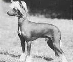 Jaspar of Kojak