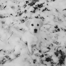 Snow loving Remington
