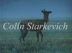 "Cow Elk After Summer Rain (9 by 12"" oil on canvas) $350.00"