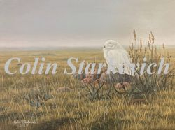 """Days of Spring - Snowy Owl (12 by 16"""" acrylic on panel)"""