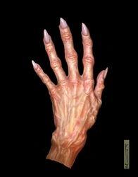 Skellig's hand.