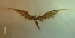 Skellig wings.