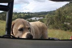 Maxie and the Clarence River