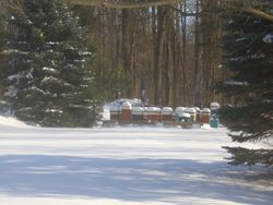 A fresh snow in our apiary