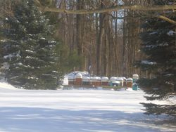 A fresh snow in our apiary 2