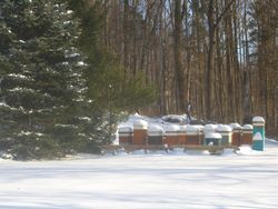 A fresh snow in our apiary 3