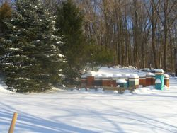 A fresh snow in our apiary 4