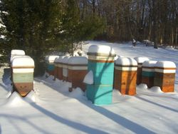 A fresh snow in our apiary 5