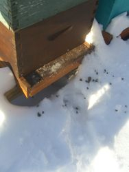 dead bees cleaned out