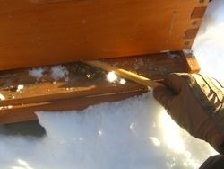 Cleaning Out Dead Bees