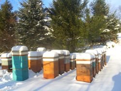 Our quiet apiary