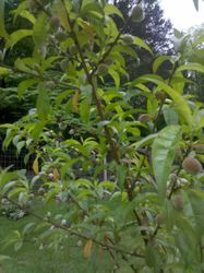 Fruit starting after pollination