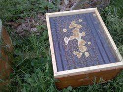 Inside the first hive