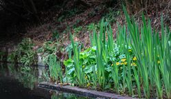 The lower pond in The Dell