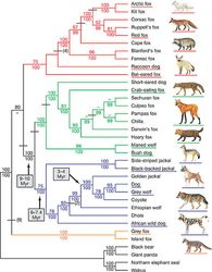 Canidae Family Tree