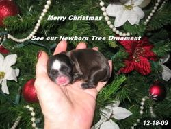 Merry Christmas from Keno (7 days old)