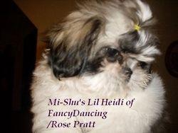 Mi-Shu's Lil Heidi of Fancy Dancing