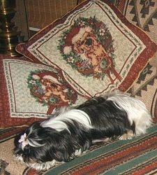 Fluffy Lou II Pregnet 2008