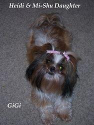 Meet Gi Gi, she is Mi-Shu and Heidi lovely lady.