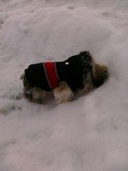 Milo's First Snow