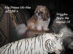 Prince Mi-Shu (Sire)