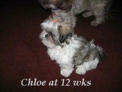 Chloe 12 weeks