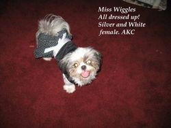 Lil Miss Wiggles (Dam)