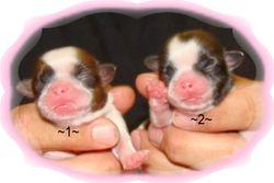 Wiggles grand babies