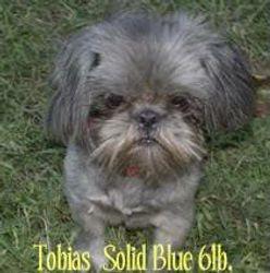 Tobias (Mun-Kee Sire)
