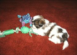 Our puppy in 2006