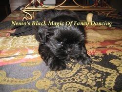 Nemos Black Magic