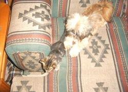 Yogi at 9 mos with Kitty