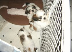 Puppies in 2006