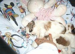 Dianna puppy resting!!
