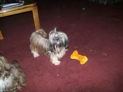 My Little Yogie!!!