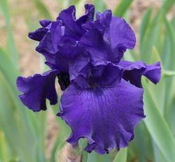 NAVY BLUES  $8