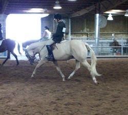 Hunter Under Saddle Extended Trot