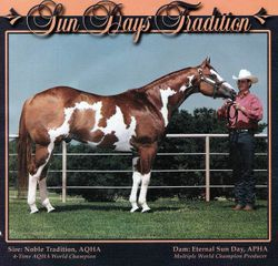 Dots Grandpa on her sire's side - Sun Days Tradition
