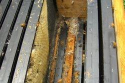 Hive Problem - Wax Moths 1