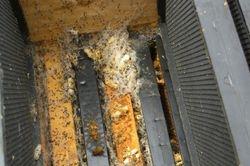 Hive Problem - Wax Moths 2