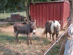 Merle and Sadie