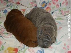 Choco&Blue female